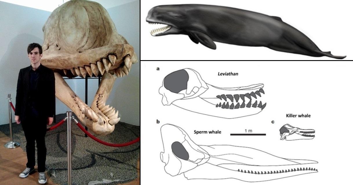 Livyatan Melvillei Fossil | www.pixshark.com - Images Galleries With A Bite!